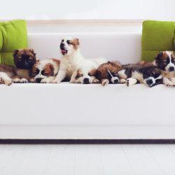 En el mundo existen 300 razas de perros.