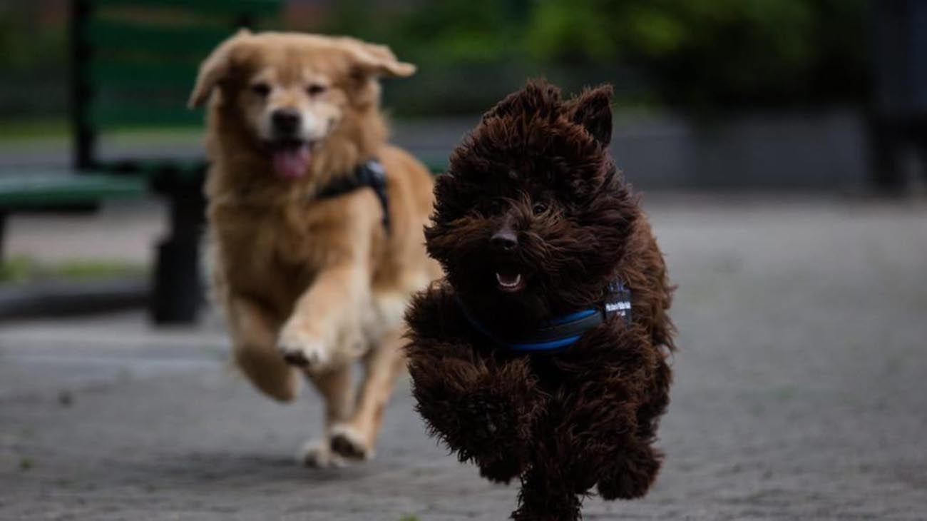Titán y Browne. Los perros de asistencia judicial del MPT.