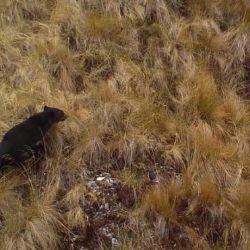 En Ecuador habitan cerca de unos 3.000 ejemplares sobre una población total de 20.000.
