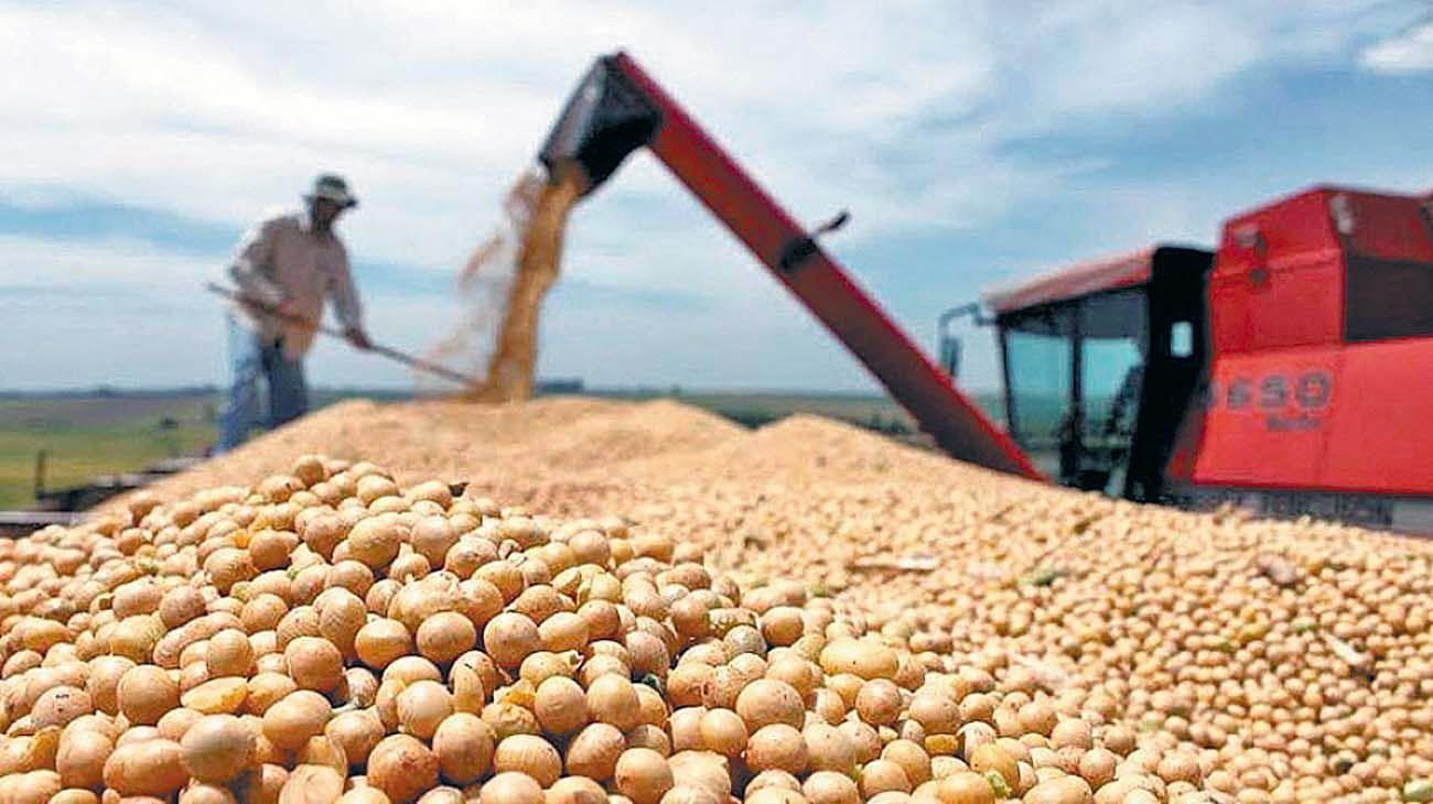 Soja. La liquidación de la cosecha –se espera un precio favorable– es clave para aportar divisas.