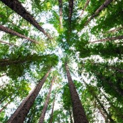 La reforestación tiene una capacidad de absorber mucho más carbono de la que se creía hasta ahora.