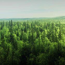 Según el estudio, Brasil es uno de los principales países donde debe aumentarse la proliferación de bosques,