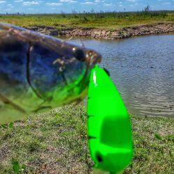 Pesca de tarariras en Entre Ríos