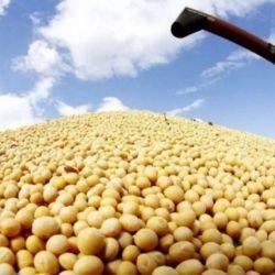 Argentina es uno de los principales productores mundiales de soja.