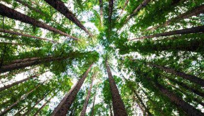 ¿En qué países se deberían cultivar más bosques para combatir el cambio climático?