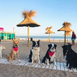 Para pasar un inolvidable día de playa con nuestras mascotas hay que tomar ciertos recaudos..