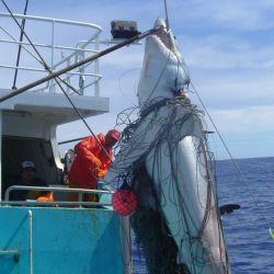 La venta de tiburones genera ingresos cercanos a los 1.000 millones de dólares.