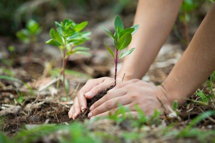 El 2021 será un año muy marcado por la agenda ambiental