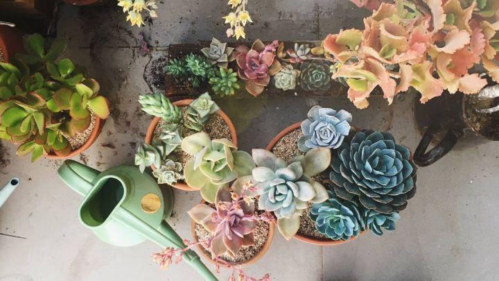 Cinco claves para cuidar tus plantas si te vas de vacaciones