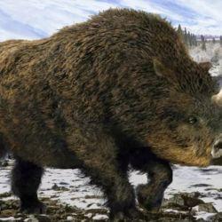 Según los especialistas, el espécimen data de entre unos 20.000 a 50.000 años de antigüedad.