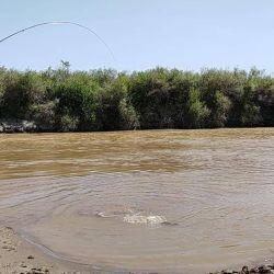 Pesca de tarariras en el río Dulce, Santiago del Estero