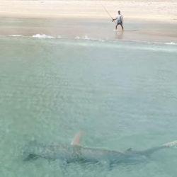 La presencia del gigantesco en las cercanías de la playa preocupó a los desprevenidos bañistas.