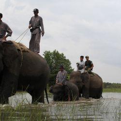 Los guardabosques de la Unidad de Respuesta a los Elefantes partieron para una patrulla en el Parque Nacional Way Kambas en Lampung. | Foto:Dasril Roszandi / AFP
