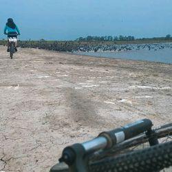 Paraje Don Julito a orillas del río Samborombón, con grandes colonias de biguás.