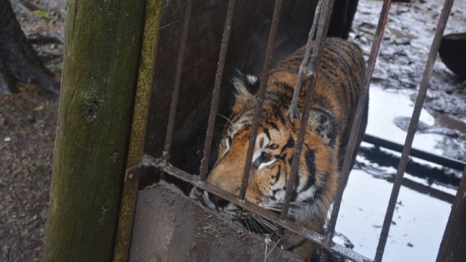 Allanaron un campo de Balcarce, provincia de Buenos Aires, con más de 300 animales vivos y 27 trofeos de caza.