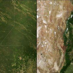 Debido a la deforestación, la mayoría de los bosques del Gran Chaco fueron reemplazados por campos de soja y ganado.