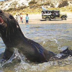 Lobos marinos sobre el mar, camino a El Sótano.