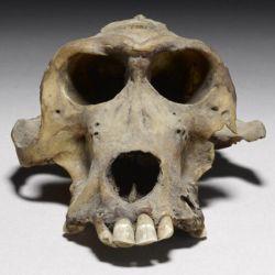 Los arqueólogos están convencidos de que la Tierra de Punt realmente existió.