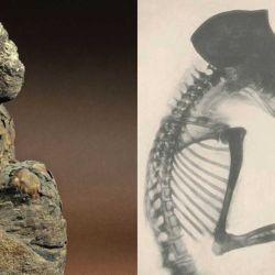 Los investigadores compararon los isótopos de los dos primates momificados descubiertos en Egipto con un enfoque en los de los períodos del Imperio Nuevo y Ptolemaico.