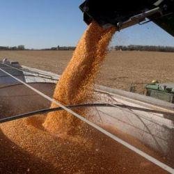 Exportación de granos.