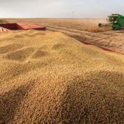 Producción de soja argentina.