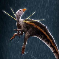 Se trata de una especie que vivió hace unos 110 millones de años.