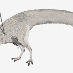 Las extravagantes espinas del pájaro prehistórico le sirvieron para presumir ante las hembras.