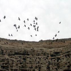 En La Loberia se encuentra la mayor colonia de loros barranqueros del mundo
