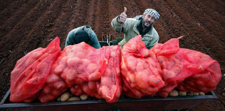 Un agricultor de patatas sirio levanta el pulgar mientras usa un tractor para plantar los tubérculos cerca de la ciudad de Binnish, en la provincia de Idlib, en el noroeste de Siria.