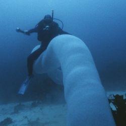 La enorme y extraña criatura medía ocho metros de largo.