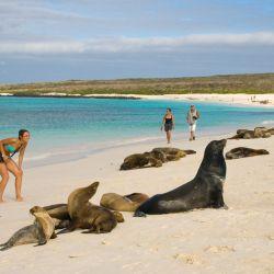Las Islas Galápagos son un punto de acceso biológico de gran importancia mundial.