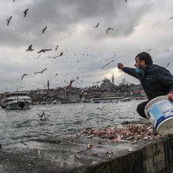 Un hombre alimenta a las gaviotas cerca del puente de Gálata con la mezquita de Suleymaniye al fondo en el distrito de Karakoy en Estambul. | Foto:Ozan Kose / AFP