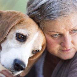 Durante la vejez de nuestras mascotas hay que reforzar dos puntos vitales en la relación: paciencia y cariño.