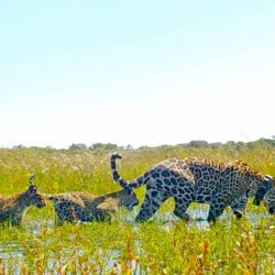 La feliz mamá y sus dos pequeños cachorros ya están nuevamente en su hábitat natural. bertad.