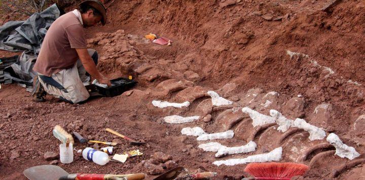 La imagen muestra a un paleontólogo durante una excavación en la que se encontraron fósiles de 98 millones de años, en la Formación Candeleros en el Valle del Río Neuquén, en el suroeste de Argentina.