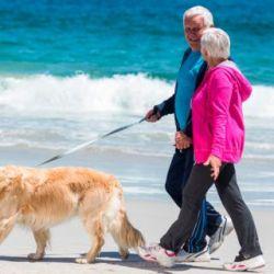 El perro es una excelente carta de socialización, tanto dentro como fuera de la casa.
