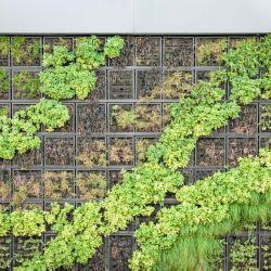 Secretos para un jardín vertical.
