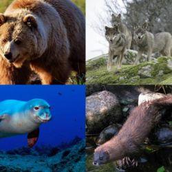 21 especies de aves y 17 de mamíferos han tenido la suerte de no extinguirse en los últimos casi 30 años.