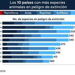 Este el ranking de los países con mayor cantidad de especies animales en peligro de extinción.