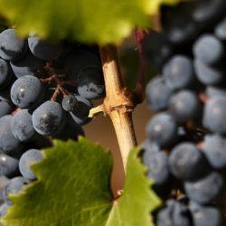 Productores vitivinícolas