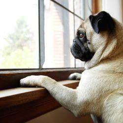 El refuerzo positivo hará que tu perro aprenda con rapidez a quedarse solo.
