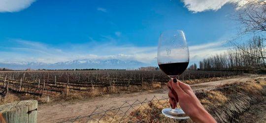 Un sueño de vida que se transformó en vino