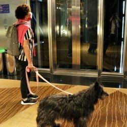 Hilton Buenos Aires, como hotel pet friendly, tiene un programa que se llama Very Important Pets, en el que con ciertos recaudos perros y gatos participan de las actividades de sus dueños.