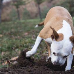 El acto de enterrar huesos es un tipo de almacenamiento de alimentos.