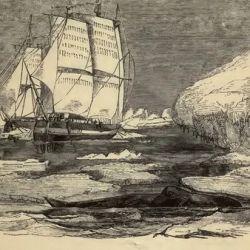 El descubrimiento tuvo lugar durante una expedición encargada por el entonces zar ruso Alejandro I.