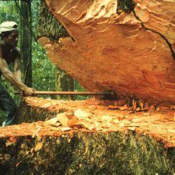 La propuesta busca proteger a las zonas de bosques nativos en peligro.
