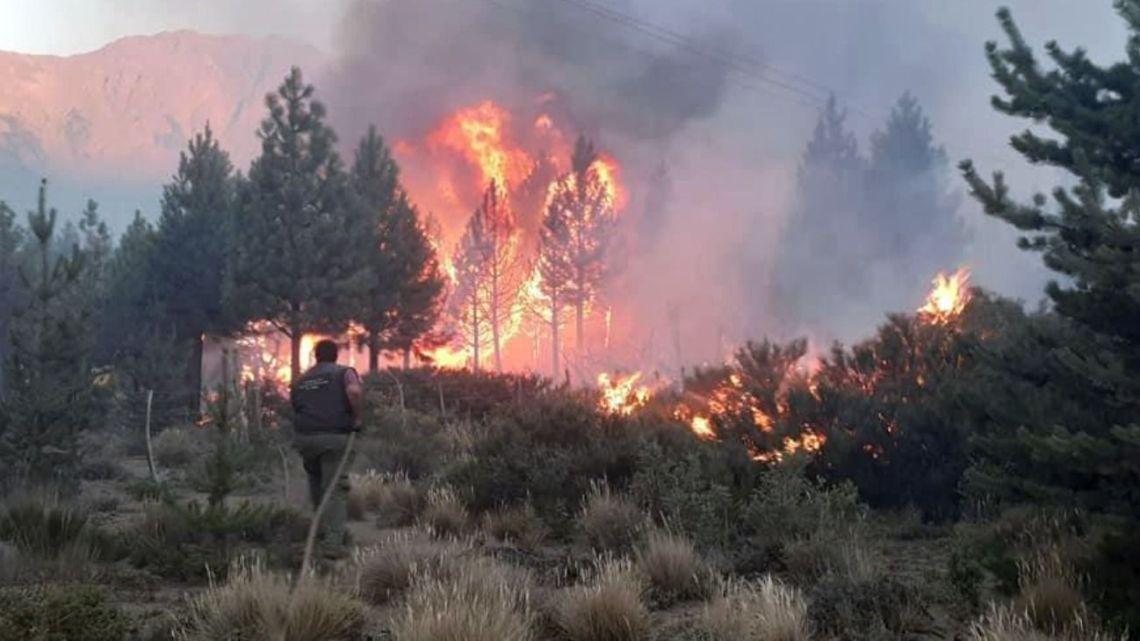 Wildfire rips through forestland near El Bolsón.