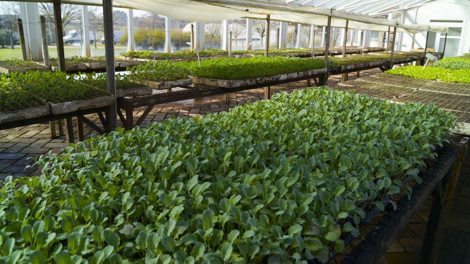 Argentina cuenta con 1.700 productores orgánicos.