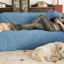 Vivir en un departamento no es excusa válida para no tener un perro.