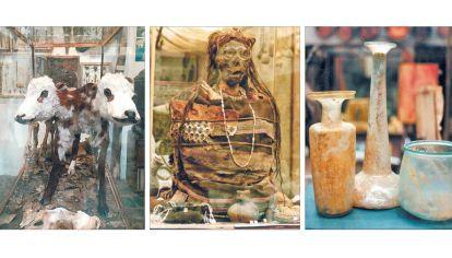 Alucinante. La multiplicidad de vitrinas con objetos en exposición, que van desde un cordero de dos cabezas y momias, hasta sillones de dentista de distintas épocas.